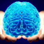Нейробиология - наука о мозге